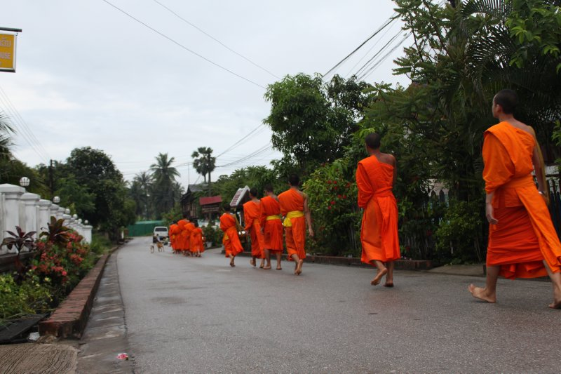 large_monks_on_morning_walk.jpg