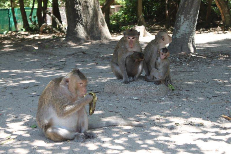 large_primate_family.jpg