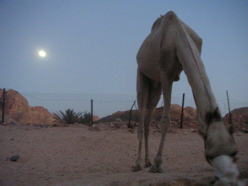Bedouin surrealism