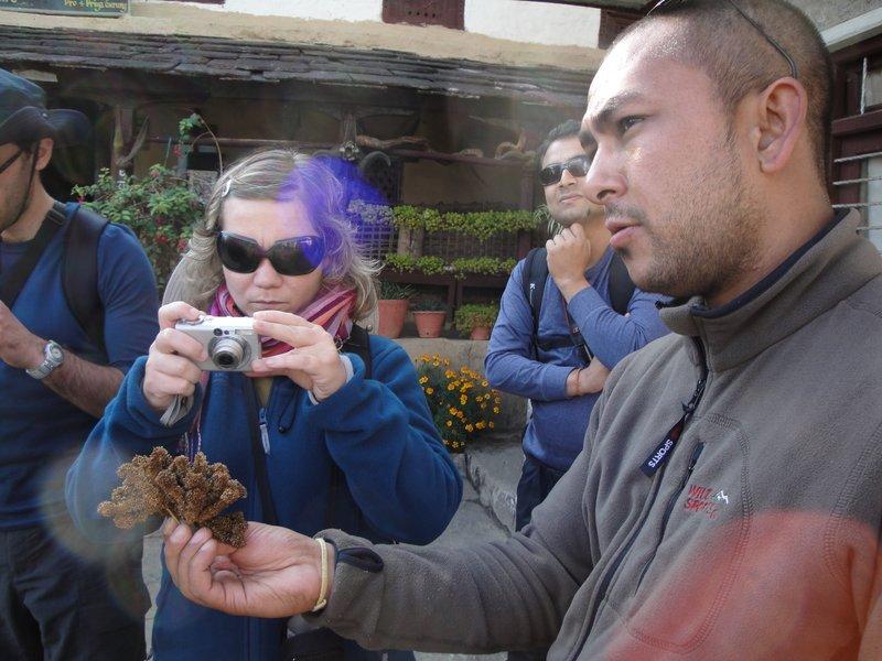 Introducing Millet to the trekkers in Ghandrung