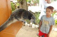 PP_Undeground_Bearcat.jpg