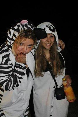 zebra_and_panda.jpg