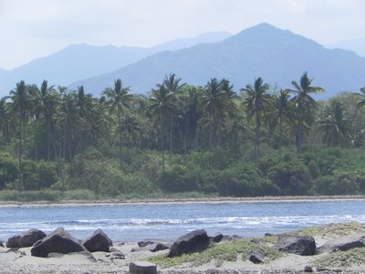 Tropical_paradise.jpg