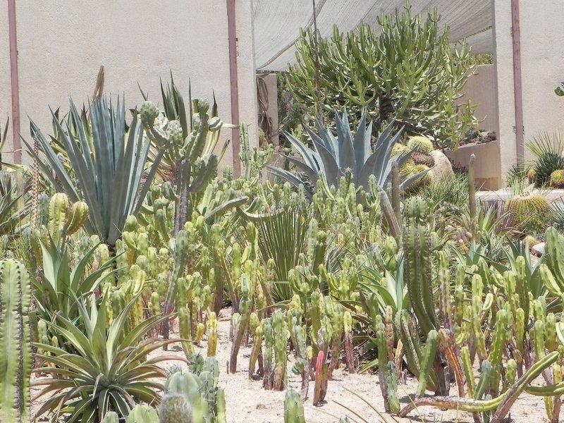 Cactus World