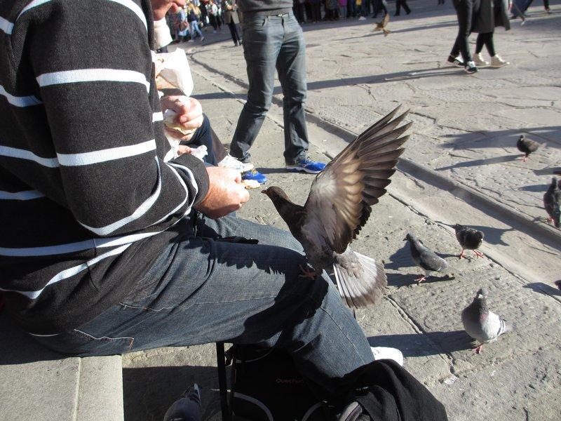 Pigeon helps itself