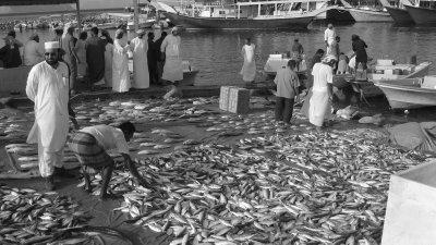 Fish market in Dibba