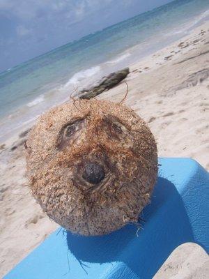 Een kokosnoot heeft steeds altijd een gezichtje!