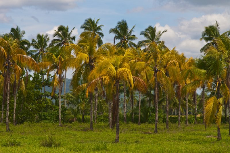 Leyte's Beautiful Palms
