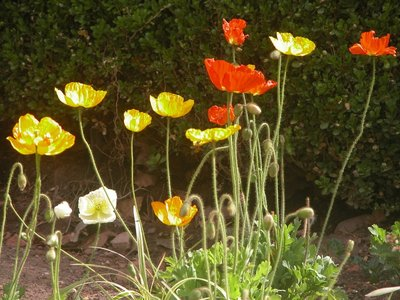 Flowers in Red Butte's Garden 01