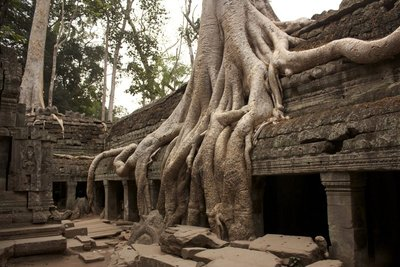 This was one of my favorite trees at Ta Prohm