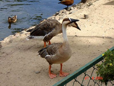 Moscow-Zoo-2159