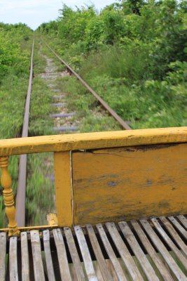 Overgrown track on the Bamboo Express