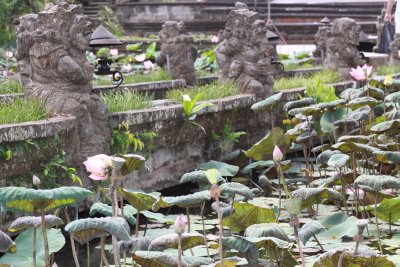 Lotus pond at the Hindu temple - Ubud