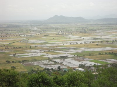 Rice fields from the top of Mandalay Hill
