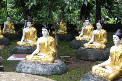 A Buddha garden
