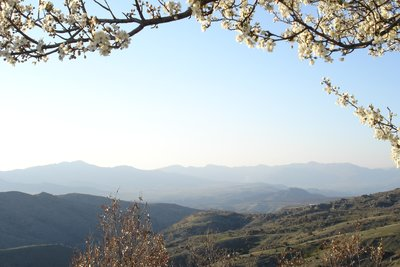 Spring also came high up in Mariovo