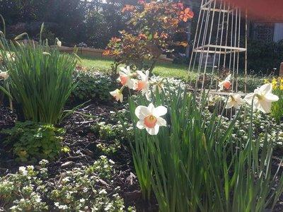 A few daffodils.