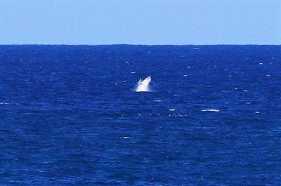 Whale shot 3.