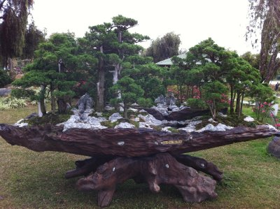 In a gardens made up of ornamental bonsai trees