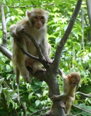 Monkeys.....