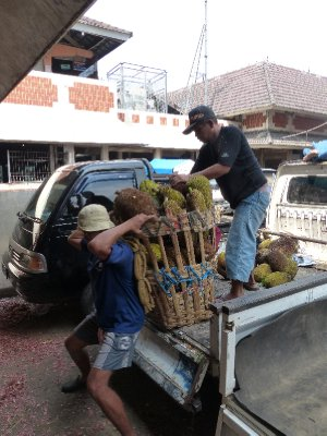 Working transporting durian