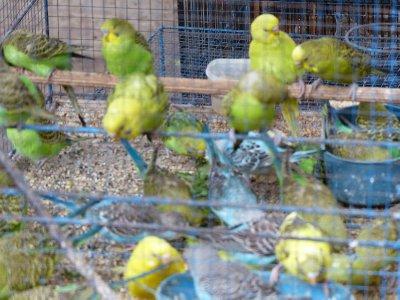 Birds and more birds