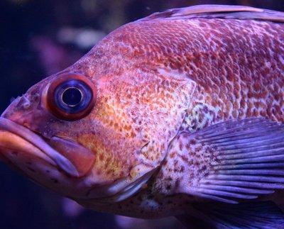 Big fish......
