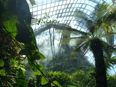Misting the upper areas of the Cloud Forest