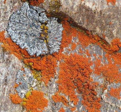 Lichen as art!!!