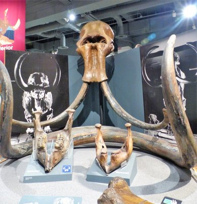 Mastadon Bones