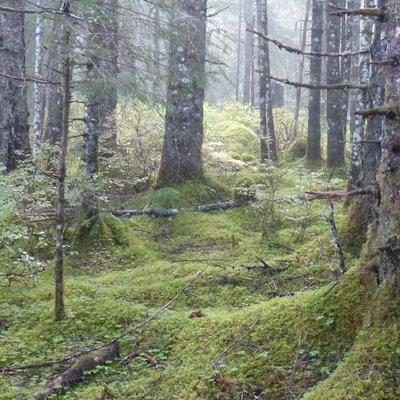 More green at Glacier National Park
