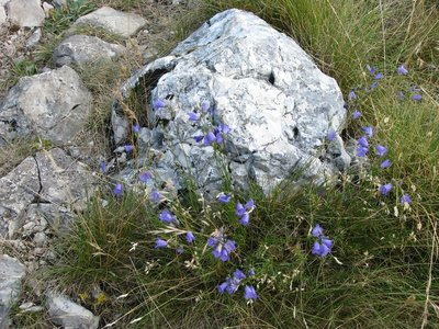 Flowers of Ucka