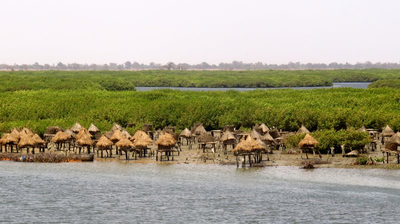 Stilt Granaries in the Mangrove