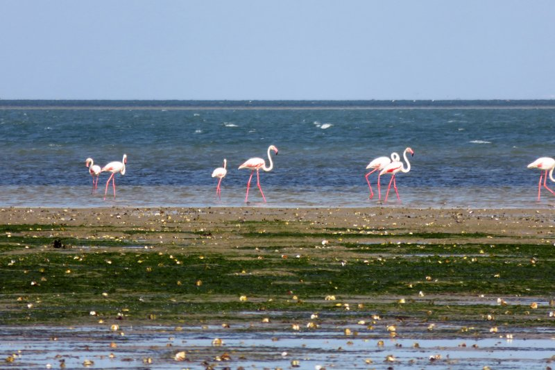 More Flamingos