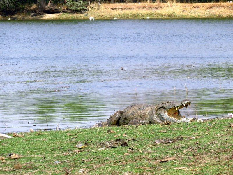 Sacred Crocodile Pool