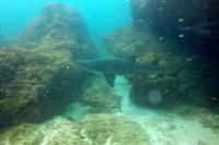Shark in the open