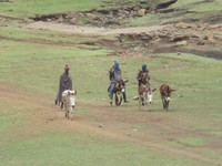 Basotho Cowboys
