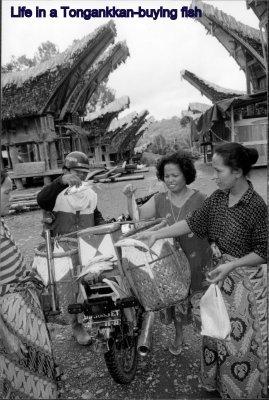 Sulawesi_I.._Scan__156_.jpg