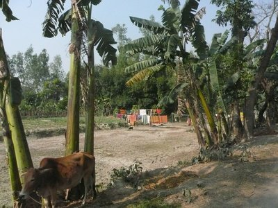 Bangladesh country side