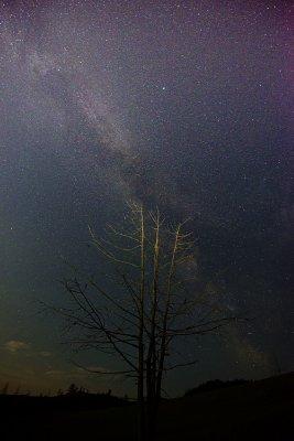 Stars over Terelj national park, Mongolia