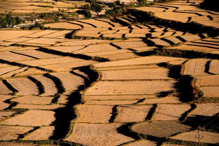 Paddy fields of Paro
