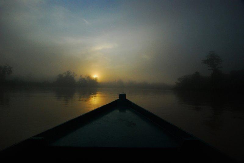 Bornean rainforest at sunrise