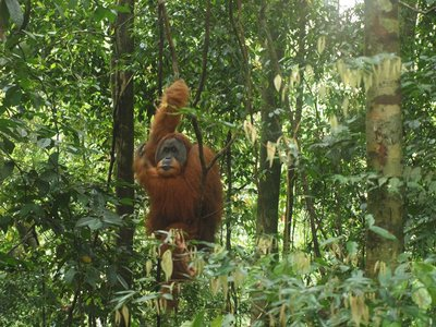 Sumatra_Upload_005.jpg