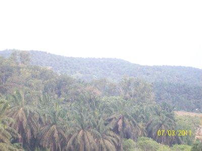 Landscape/Palm Plantations - Malaysia