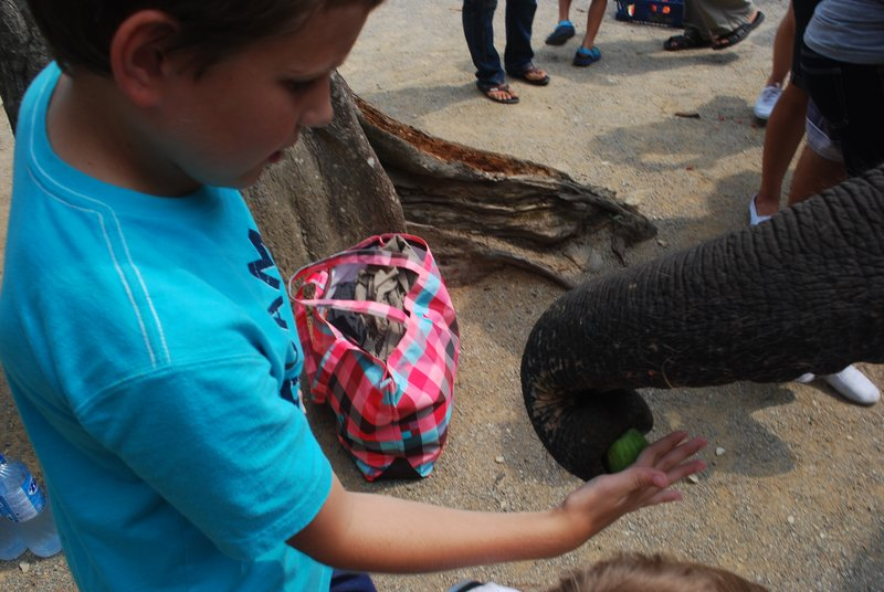Feeding the Elephants