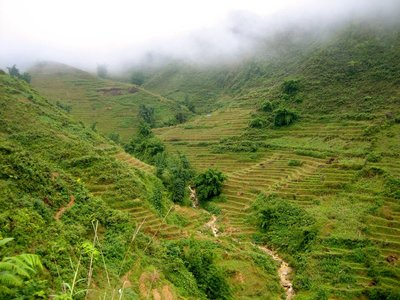 Rice terraces surrounding us during our hike in Sapa, near the border of Vietnam and China