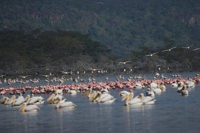 Birds! Pink flamingos