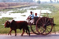 The Bull-Cart of Vietnam.