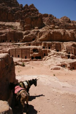 Two things everywhere - monuments and donkeys