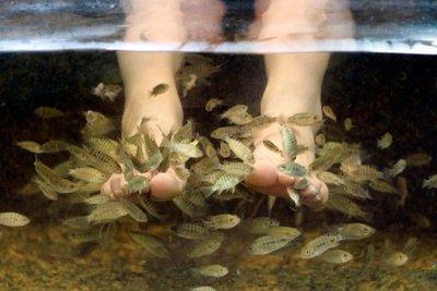 Fish Foot Spa, Kuala Lumpur